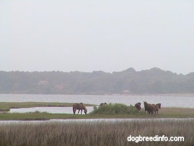 Five Ponies on a strip of land in the middle of a body of water