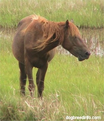 Pony in a Marsh