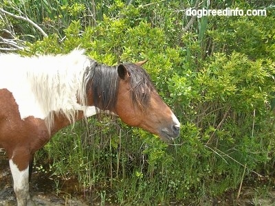 Close Up - A Pony is sticking its head next to a lot of weeds