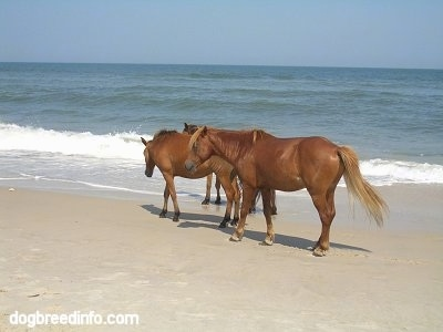 The left side of Three ponies standing beachside
