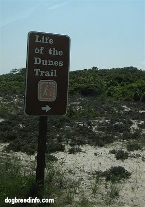 Sign that reads 'Life of the Dunes Trail'