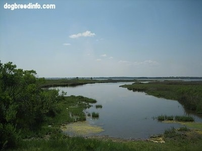 Assateague Wetlands