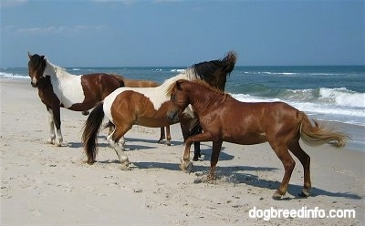 The ponies are stomping around in the sand