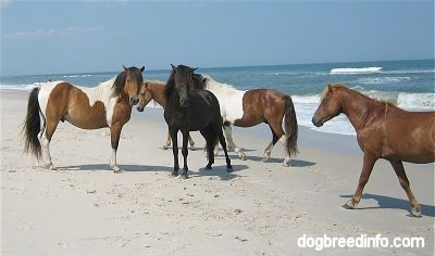 Five Ponies standing beachside