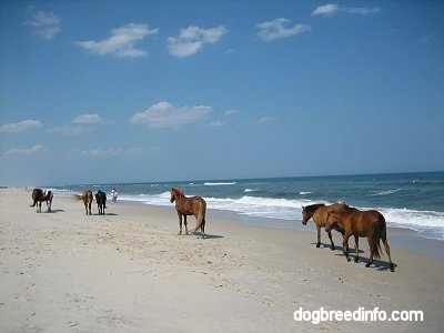 Seven Ponies walking beachside with people standing on the beach