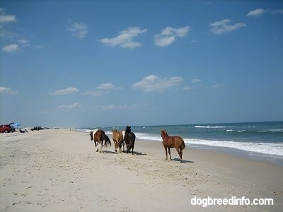 Four ponies running ahead of a Pony beachside