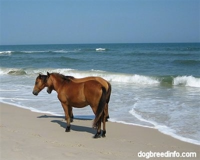 Two Ponies standing beachside. Waves are crashing behind them.