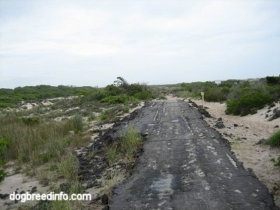 An Old destroyed Asphalt Road