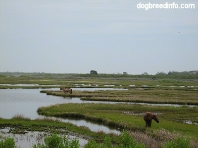 Three Ponies standing in the marshland