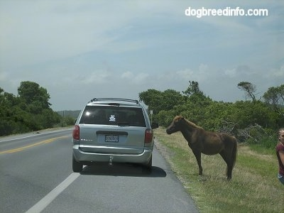 A Van is pulled over roadside next to a Pony