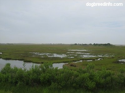 A wide shot of different Marshlands