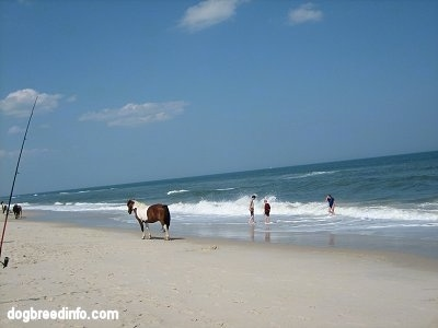 People fishing and swimming with Ponies walking on the beach