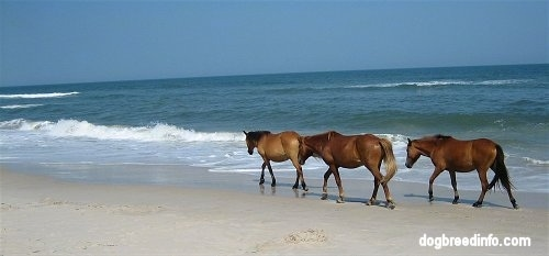 Three Ponies walking beachside