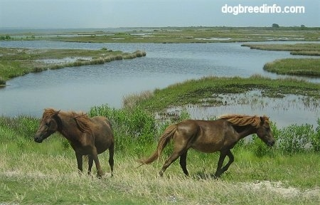 Two Ponies are standing in a marshy area