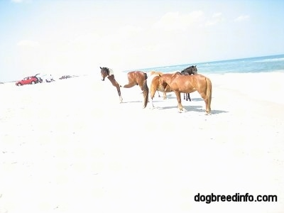 Three Ponies on the beach and families fishing out of their car in the background