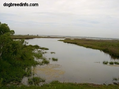 Marshland with lots of water