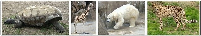 Left - Tortoise, Left Middle - Giraffe, Right Middle - Polar Bear, Right - Cheetah