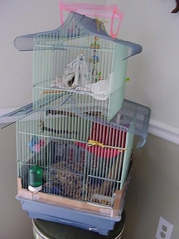 A three story rat cage is placed on top of a stool.