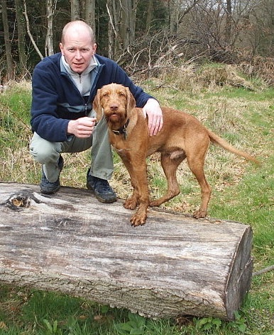 A red Wirehaired Vizsla dog standing on a log next to a man who has his hand over the dog.