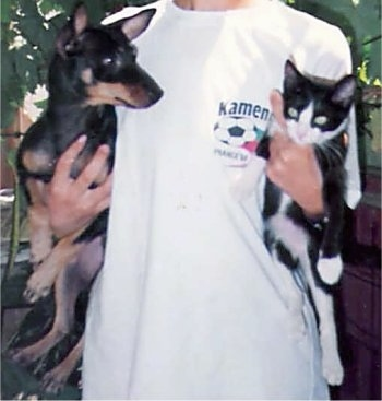 A person in a white t-shirt holding a black and tan German Pinscher dog in one arm and a black and white at in the other arm. The dog is looking wide-eyed and alert at the cat.