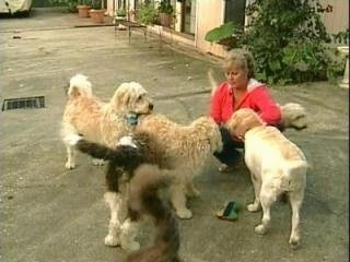 A pack of Labradoodles are standing around a lady who is kneeling on a black top out on a patio in front of a house.