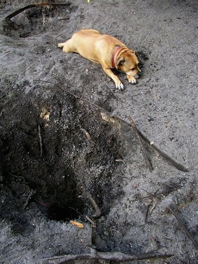 how to stop my puppy from digging holes