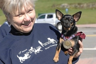 Molly the Chihuahua is in the arms of a lady. Molly has a medal on