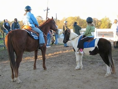 The back of a brown with white Horse and the back of a white and brown Paint Pony are standing in dirt and they each have a person on their backs at a western horse rodeo.