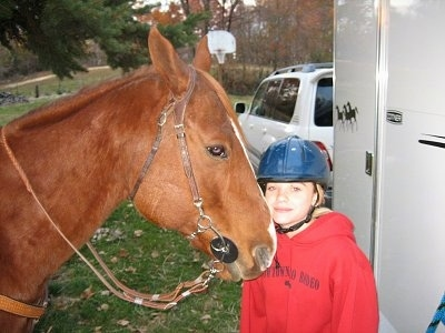 A brown with white Mexican Quarter Horse is standing next to a girl in a blue helmet and a red sweat shirt.