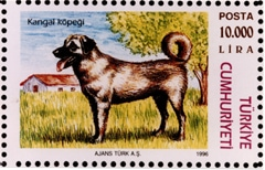 Kangal Dog on a pink Turkish postage stamp. The dog is standing in grass and there is a white house with a red roof behind it.