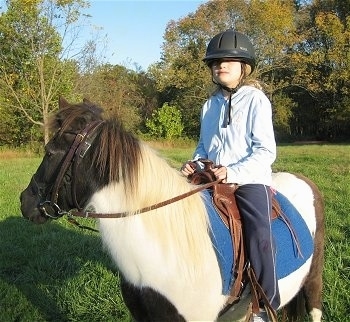 A girl in a light blue jacket and a black riding helmet is sitting on the back of a brown and white paint pony.