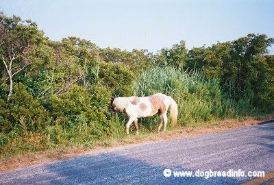 Pony walking roadside