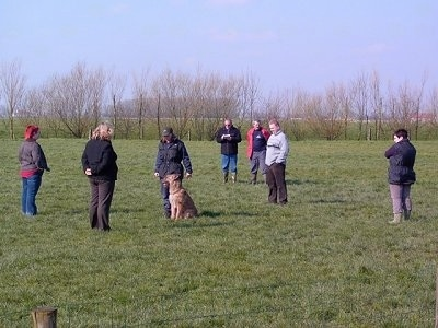 A tan Belgian Shepherd Laekenois is sitting in a field surrounded by seven people