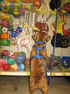 Wow! Look at all these toys!