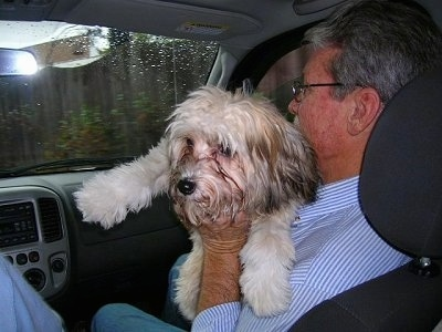 Gracie the Chinese Crested Powderpuff is in the arms of a man, who is in the passenger seat of a car