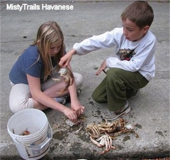 A boy is tossing a crab into a white bucket. There is a blonde haired girl looking down and cleaning a crab.