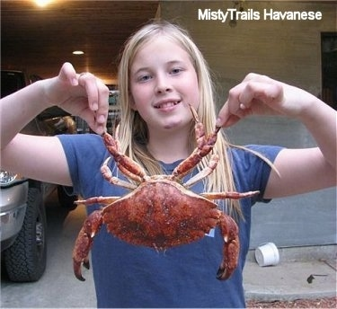A blonde haired girl is holding up a Red Rock Crab by its pinschers.