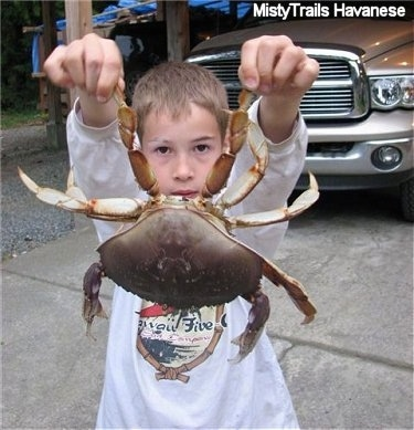 A boy is standing in a driveway and it is holding a crab up by its pinschers.