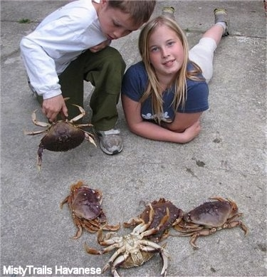 A boy is kneeling and he is putting a crab down. Next to him is a blonde haired girl laying down and her head is tilted to the left. There are four crabs in front of them and one crab is upside down.
