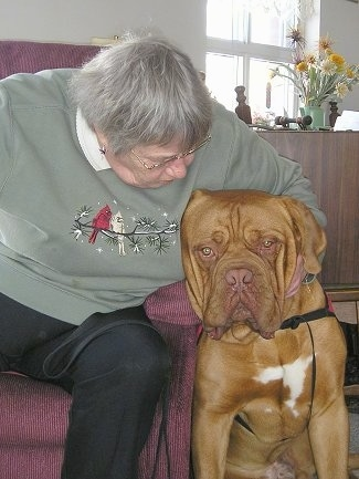Tars Tarkas my 15 Month Old Male Dogue De Bordeaux on his Volunteer Therapy Visit to our local Seniors Home