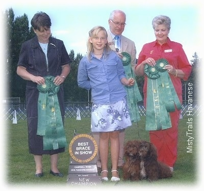 A blonde-haired girl dressed in blue is holding the leash of two small, long haired, chocolate Havanese dogs that are sitting in grass. She is surrounded by people in suits holding ribbons.