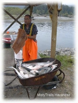 A man in bright orange suspenders is wiping his hands with a towel and in front of him is a wagon full of various fish.