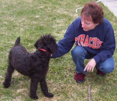 A black Giant Schnoodle puppy is standing outside and there is a person wearing a syracuse sweatshirt kneeling next to it. There is a stick in front of them