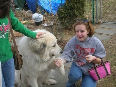 A Great Pyrenees is sitting on a walkway with its paw in the hand of a girl who is kneeling next to it. There is another girl in a green hoodie petting the dog