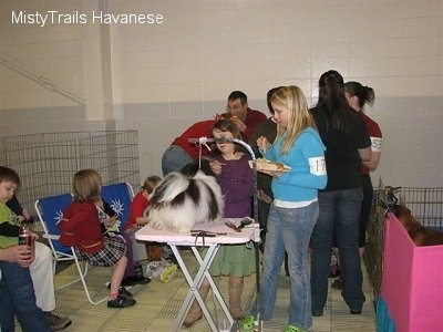 A dog is standing on a table and it is surrounded by people in a room back stage at a dog show.