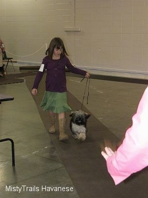 A girl in a purple shirt is leading a dog on a walk down a long rug.
