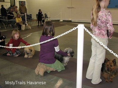 The back of three children standing and sitting behind their dogs on a long rug at a dog show.