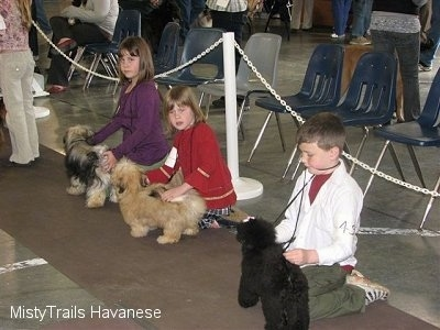 Three children are kneeling on their knees on top of a carpet and they are behind dogs.