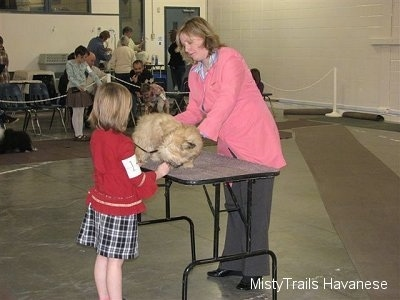 A girl in a red shirt is standing behind a table that has a tan dog on it. There is a lady in a pink jacket inspecting the dog.