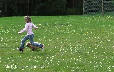 A little girl in a pink shirt is running across a field and running next to her is a tan with white Havanese puppy.